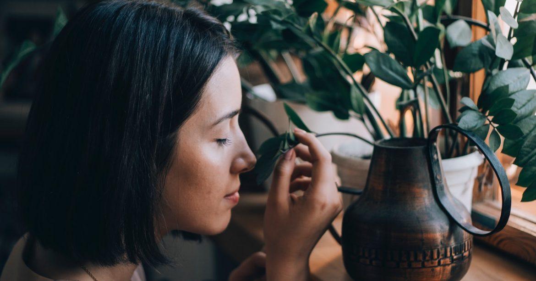 4 usi delle piante per elevare la tua energia